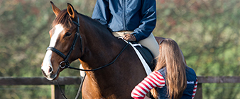 Applications now open for Equestrian Coaching Certificate Level 4