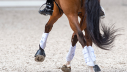 World Class Programme: Dressage